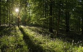 Aperçu fond d'écran Lever en été idyllique, les rayons du soleil, des fleurs sauvages, forêt