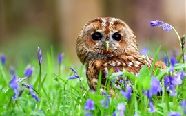 Tawny owl, bird in the blue flowers