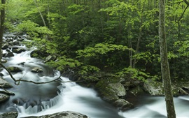 Preview wallpaper Tremont, Great Smoky Mountains, creek, rocks, trees, Tennessee, USA