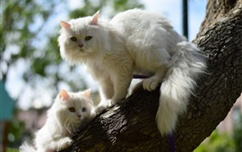 Two white cats in tree