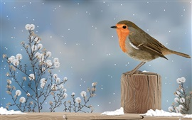 Art drawing, sparrow, bird, winter, snow