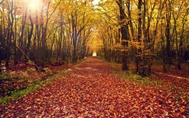 Autumn forest, trees, yellow leaves ground, path