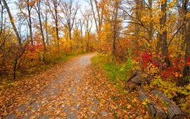 Preview wallpaper Autumn, park, forest, trees, yellow leaves, path