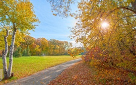 Autumn parque, caminho, árvores, raios de sol