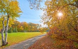Autumn park, path, trees, sun rays