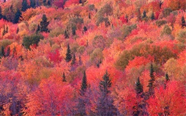 Preview wallpaper Autumn red forest, trees, slope