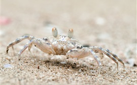 Preview wallpaper Beach, sand, crab, Thailand