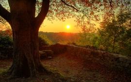 Beau lever de soleil du matin, le bois, l'arbre, brindilles, feuilles