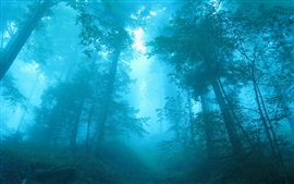 Blue forest, fog, trees, dawn