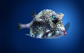 Preview wallpaper Boxfish cowfish in Atlantic underwater