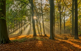 Preview wallpaper Brugge, Belgium, forest in autumn, sun rays