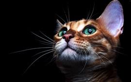 Aperçu fond d'écran visage chaton mignon, yeux verts, fond noir