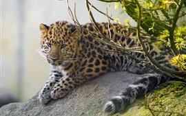 lindo cachorro de leopardo