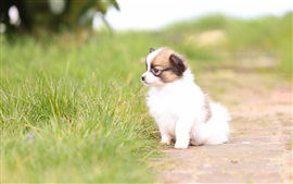 Preview wallpaper Cute white dog in the nature