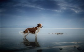 Dog standing at coast, sea, water, dusk