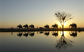Preview wallpaper Elephants in safari park at sunset