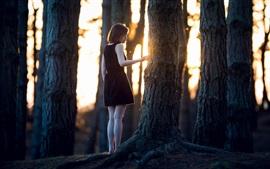 Bosque, chica solitaria, los árboles, los rayos del sol