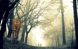Preview wallpaper Forest, trees, mist, walk road, people