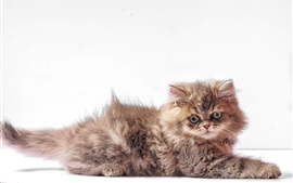 Preview wallpaper Furry kitten, white background