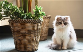 Preview wallpaper Furry white kitten sit down, basket, room