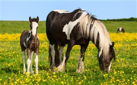 Preview wallpaper Horses, summer, wildflowers, grass