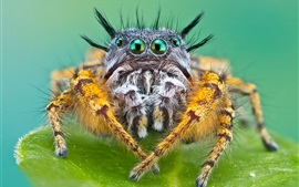 Insect spider macro photography