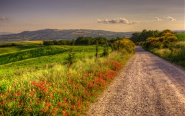 Italy, nature scenery, road, fields, trees, clouds, dusk