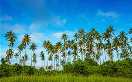 Preview wallpaper Malaysia, Bohey Dulang Island, palm trees, grass, blue sky