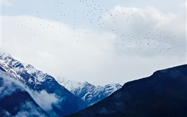 Preview wallpaper Mountains, snow, clouds, birds flying