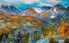 Montanhas, árvores, neve, inverno