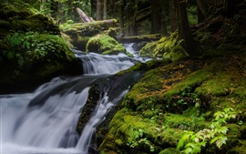 Nature landscape, waterfall, trees, moss