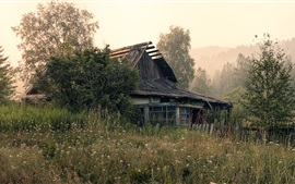 Old house, morning, trees, grass, wildflowers, fog