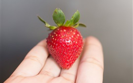 Preview wallpaper One strawberry on the palm