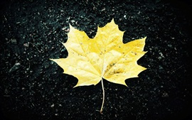 Preview wallpaper One yellow maple leaf, ground, autumn