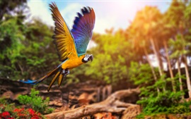 Preview wallpaper Parrot flying in forest