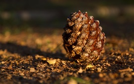 Preview wallpaper Pine cones on the ground