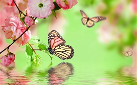 Pink flowers blossom, spring, butterfly, water reflection