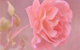 Preview wallpaper Pink rose flower close-up, water drops