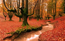 Red leaves ground, creek, forest, trees, autumn landscape