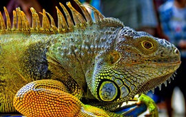 Répteis iguana verde close-up