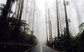 Preview wallpaper Road in the forest, trees, fog