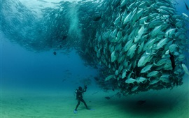 Preview wallpaper Sardines, fish underwater, diver, Cabo Pulmo National Park, Mexico