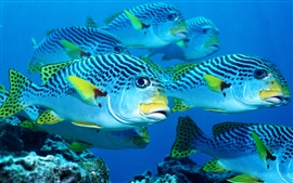 Preview wallpaper Sea fish, underwater