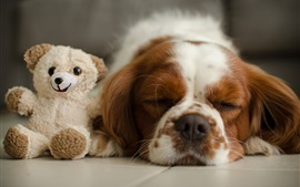 Sleeping dog and toy bear