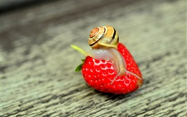 Snail and big strawberry
