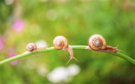 Preview wallpaper Snail, insect, grass, bokeh