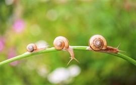미리보기 배경 화면 달팽이, 곤충, 잔디, 나뭇잎