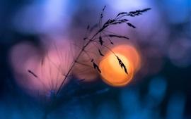 Лето, трава, закат, блики