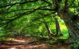 Aperçu fond d'écran Été, arbres, route, nature paysages