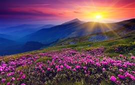 Preview wallpaper Sunrise, mountains, flowers, grass, dawn